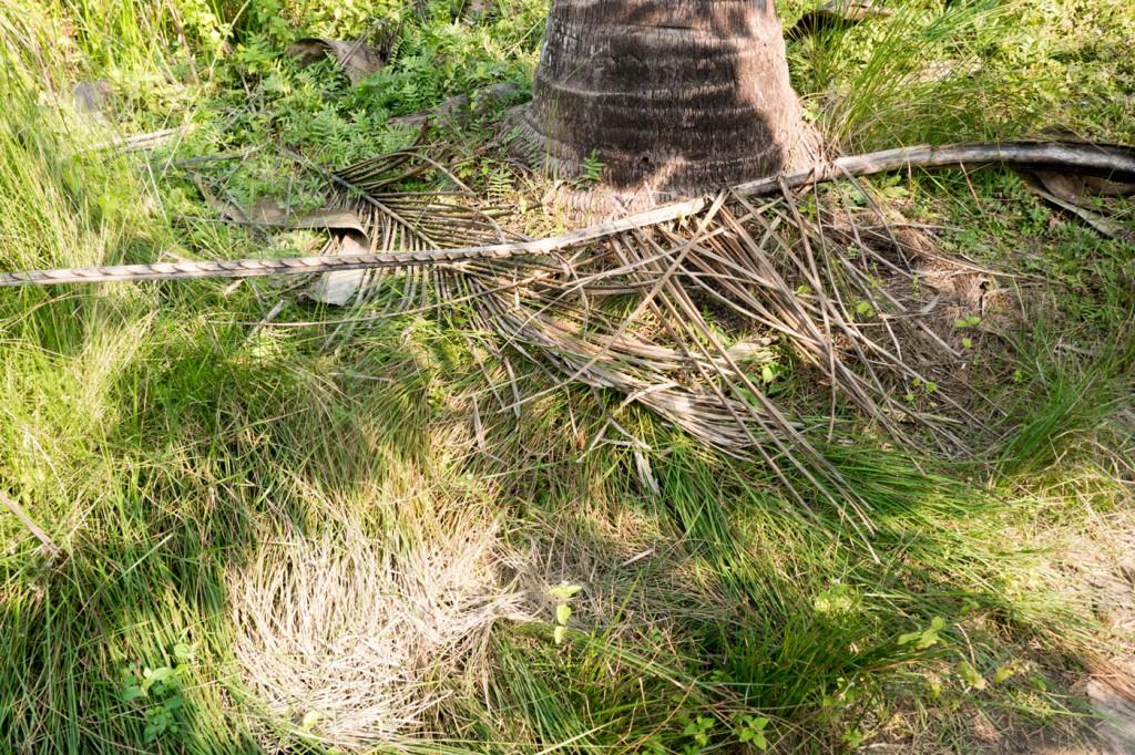 Hier hat der Tiger zuletzt im Gras gekuschelt. Das ganze erweckt langsam den Eindruck eines groß angelegten Reliquienschreins.