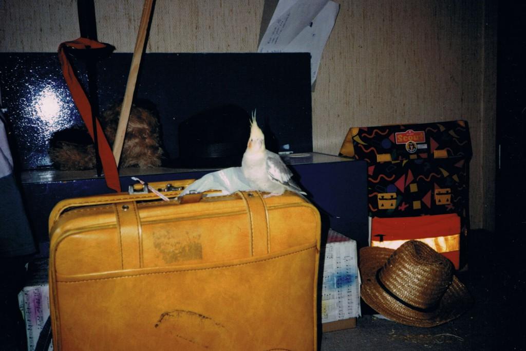 Hugo auf meinem gelben Koffer.