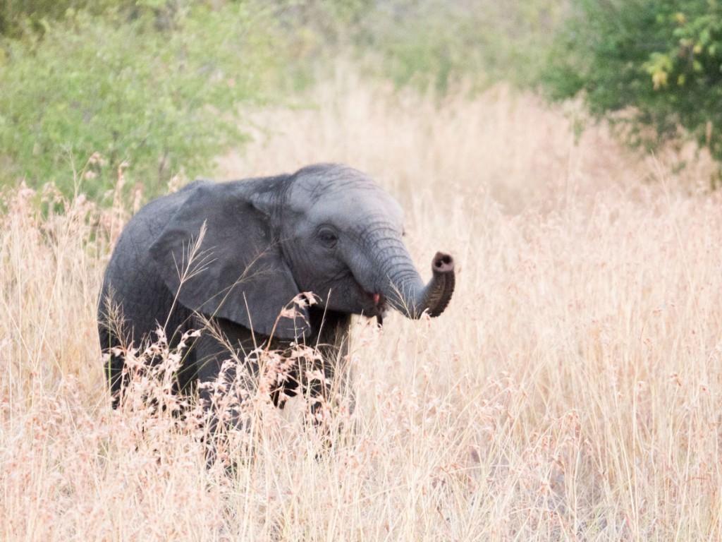 Mit diesem süßen Baby-Elefant leiten wir elegant zum Thema des Berichtes über.
