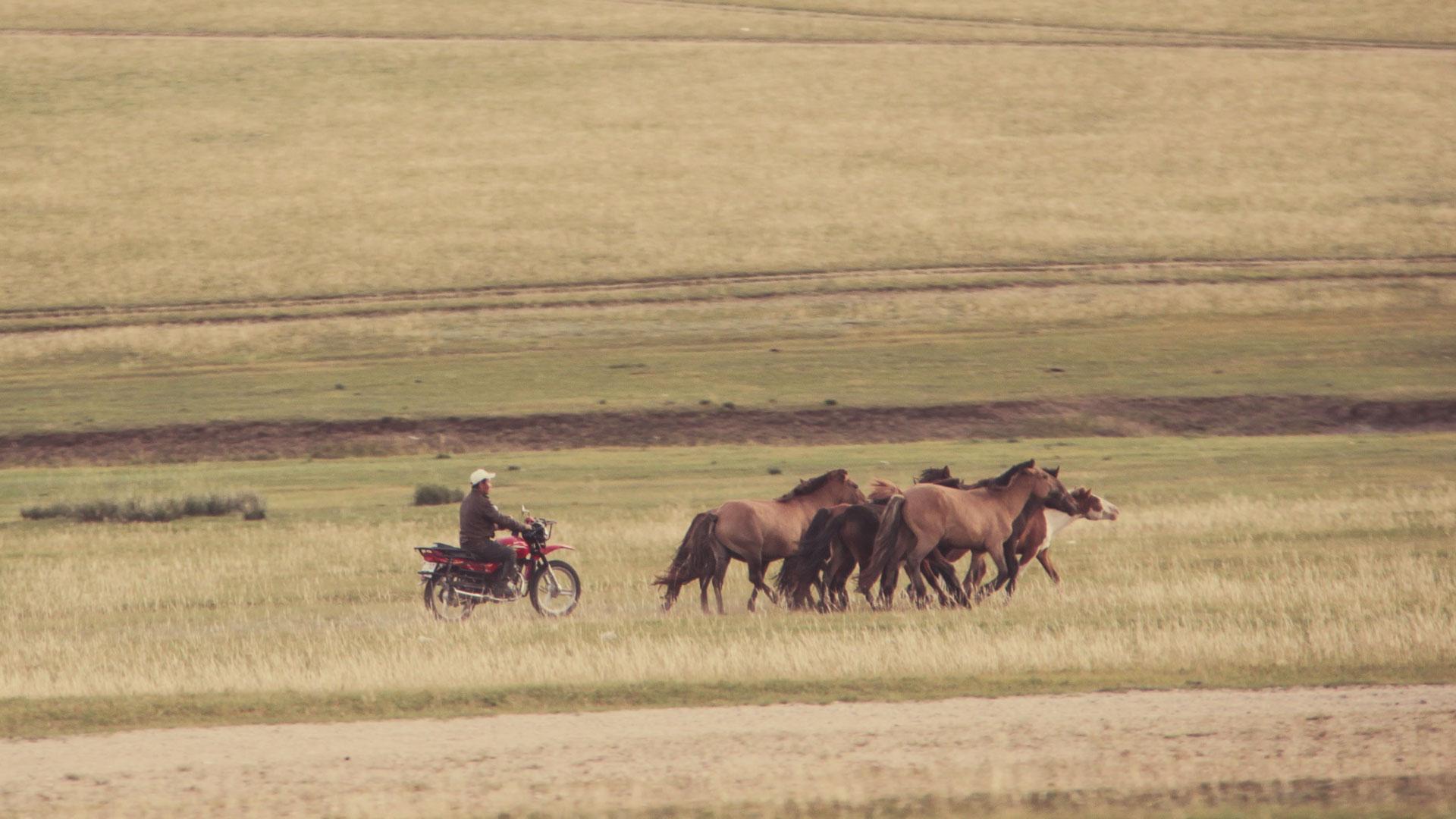Pferdehüten-mit-Motorrad