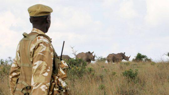 Bei den Nashornmännern