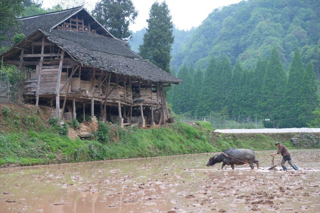 """Einblicke ins """"alte"""" China zu bekommen, ist als Tourist oft gar nicht so einfach. Die populären Reiseziele wurden aufwendig restauriert und sehen meist gar nicht mehr so alt aus. In der Hunan-Provinz allerdings brachten mich meine Gastgeber in eine Region, in der viele Menschen noch in alten Holzhäusern leben."""