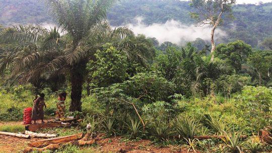 Voodoo, ein Ananasbauer und das heilige Krokodil