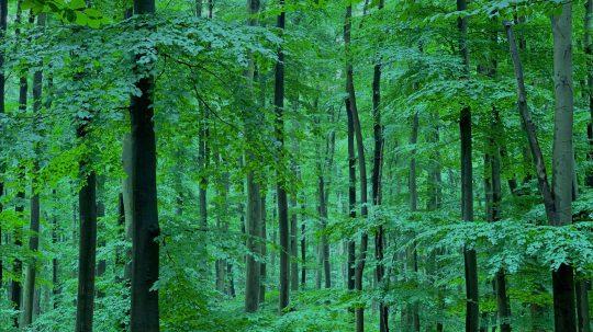 Der Geschmack des Waldes
