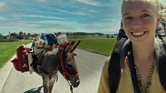 Ein Esel zum Pferdestehlen